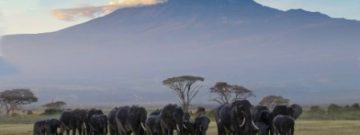 africa-elephant Amboseli