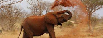 elephant-website