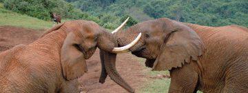 Elephants Aberdare National Park