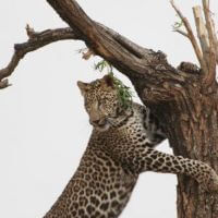 5-DAYS KENYA WILDLIFE SAFARI
