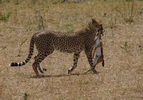 3 DAYS 2 NIGHTS MAASAI MARA KENYA SAFARI TOUR