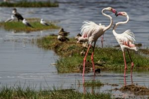 Flamingo Lake Nakuru