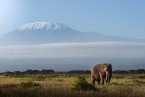 Elephant with mount Kenya
