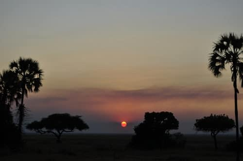 MASAI MARA NIGHT & WALKING SAFARI