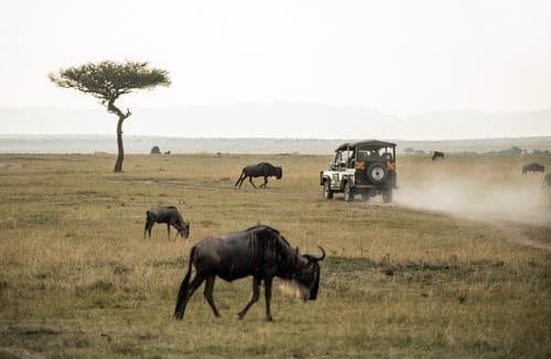 budget November safari