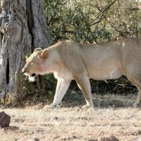 9-DAYS KENYA AND TANZANIA WILDLIFE SAFARI