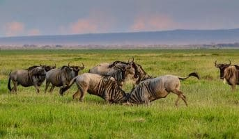 7 DAYS WILDEBEEST MIGRATION SAFARI