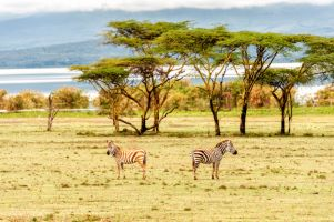 NAIROBI TO LAKE NAIVASHA DAY-TOUR WITH CRESCENT ISLAND