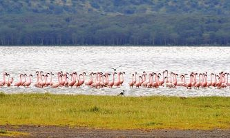 3-DAYS LAKE NAKURU BIRD-WATCHING SAFARI