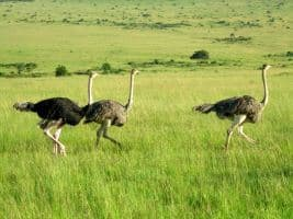 7 DAYS BIRD WATCHING KENYA SAFARI