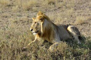 6-days luxury Kenya safari
